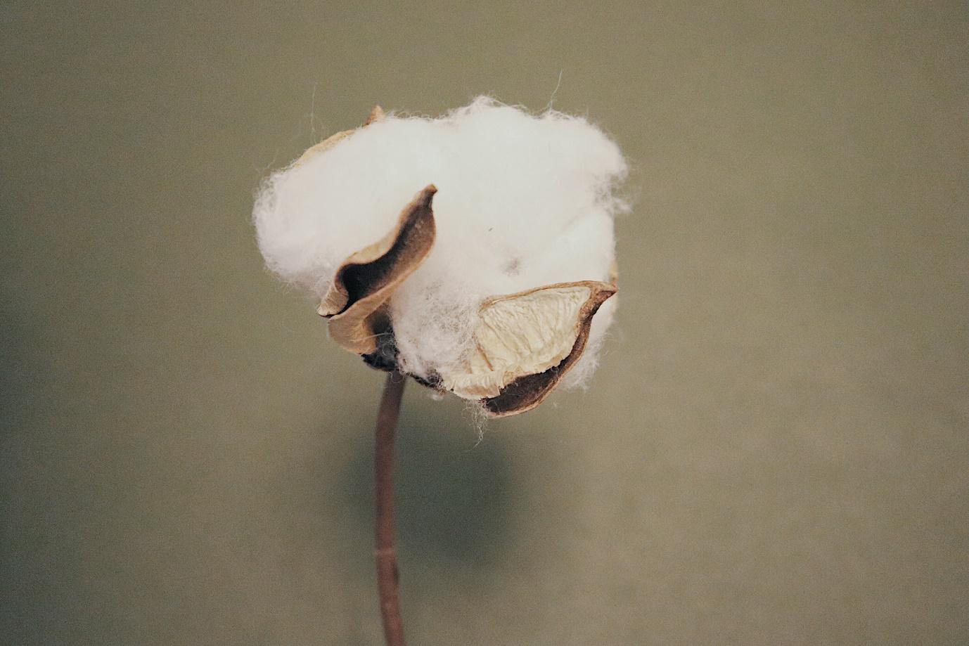 Five reasons to buy clothing made from organic cotton